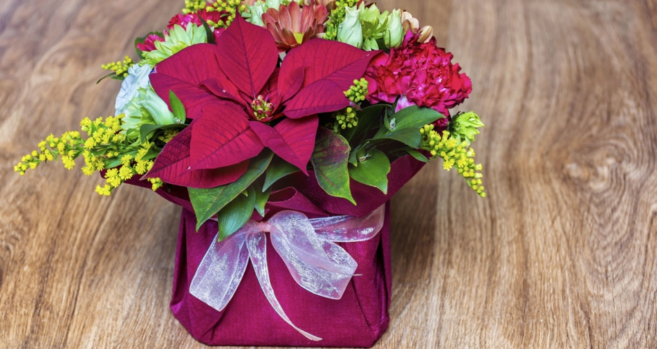 A poinsettia with an array of other flowers in a bow tied pot.