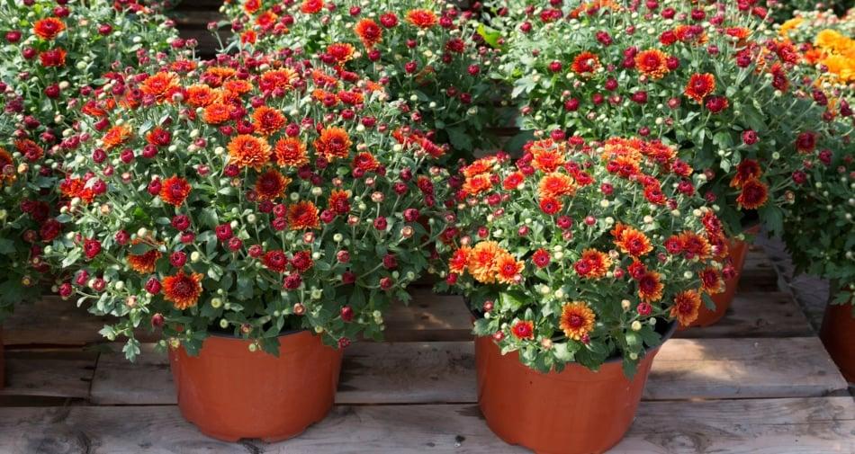 Flower - Flowering plant