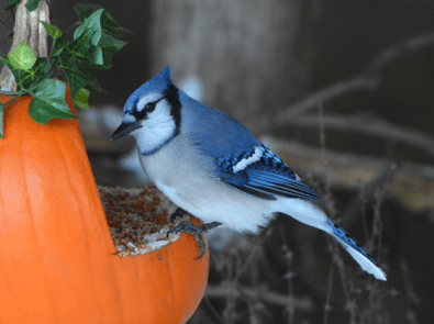 Create A Pumpkin Bird Feeder featured image