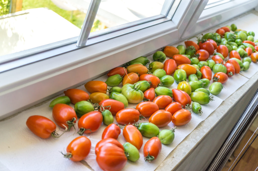 green and red tomatoes on a windowsill