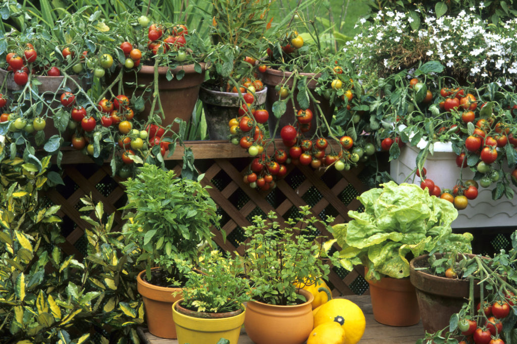 patio containers of vegetables, gardening