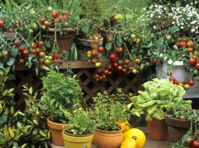 Big Gardening Ideas For Small Spaces featured image
