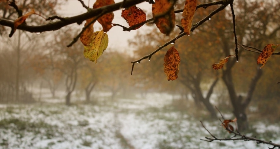 Fading autumn leaves hang with a snowy landscape in the background.