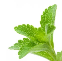 Stevia: Growing Sweets in the Garden featured image
