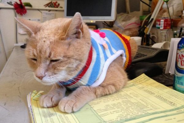 Mayor Stubbs, a cat who was mayor of Talkeetna, Alaska