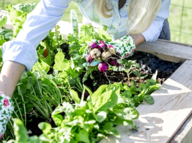 Get A Steady Supply of Fresh Vegetables With Succession Planting featured image