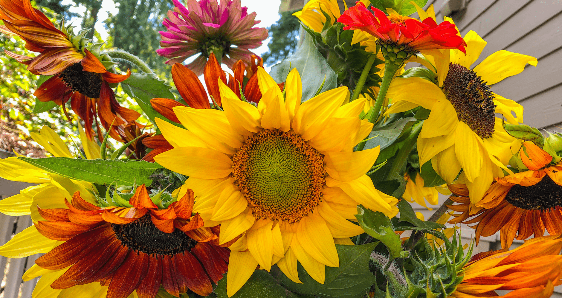 13 Reasons To Love Sunflowers Even Moreimage preview