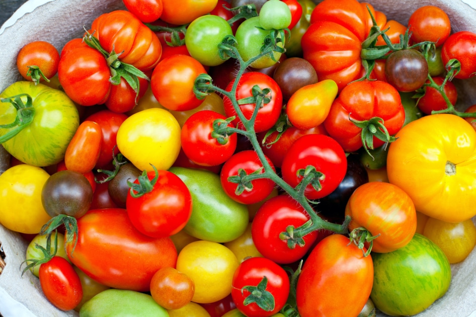 Cherry Tomatoes - Buschtomate