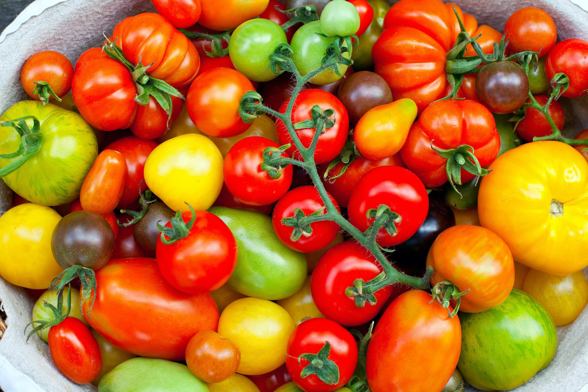 10 Things To Do With All Your Garden Tomatoesimage preview