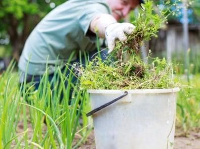Best Weather For Gardening Tasks featured image
