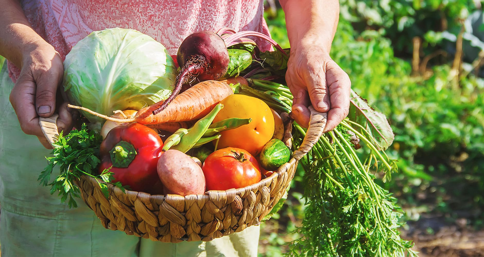 Know When To Harvest These 6 Vegetables - Farmers' Almanac