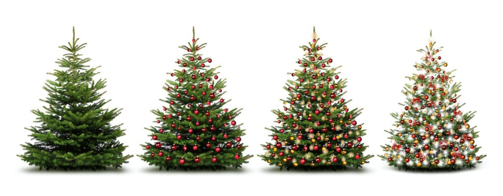 Christmas trees in a row, decorated