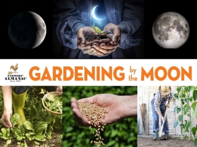 Planting by the Moon | Gardening Calendar featured image
