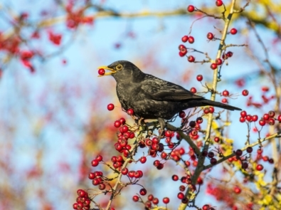 "Meet The Birds of the ""Twelve Days of Christmas"" featured image"