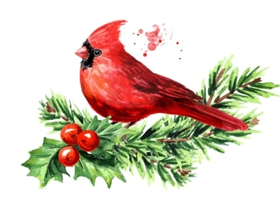 7 Popular Songbirds That Decorate The Holidays featured image