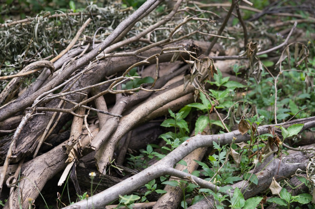 a pile of brush in the woods