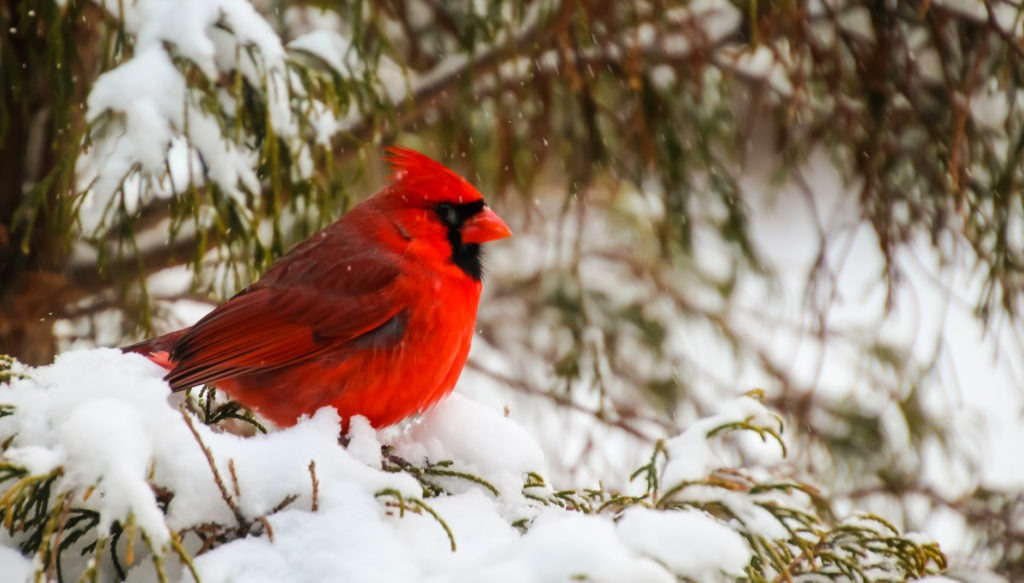 Easy Ways to Provide Shelter for Winter Birds and Wildlife
