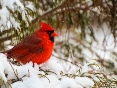 Easy Ways to Provide Shelter for Winter Birds and Wildlife featured image