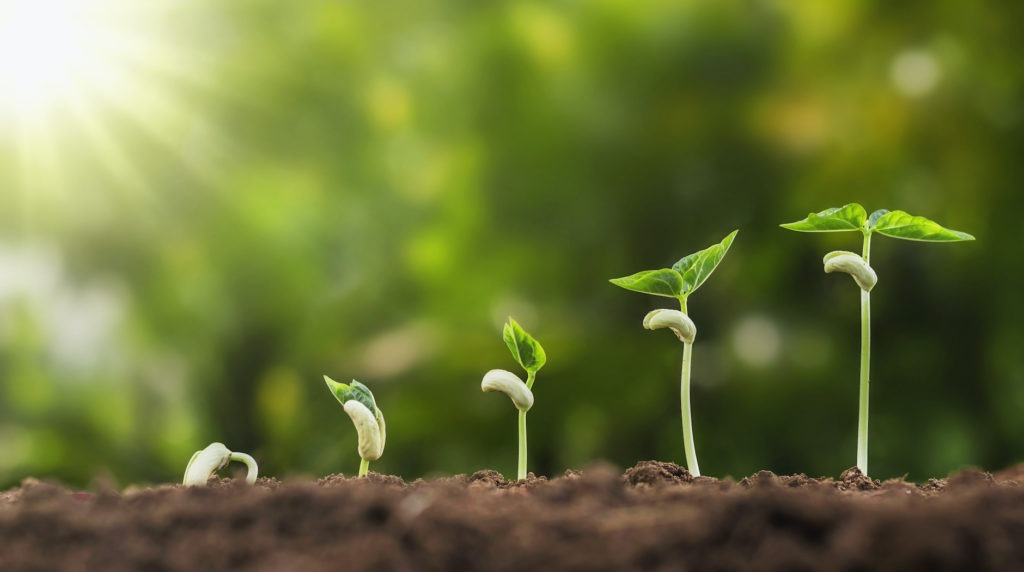 seedlings growing in dirt and sunlight