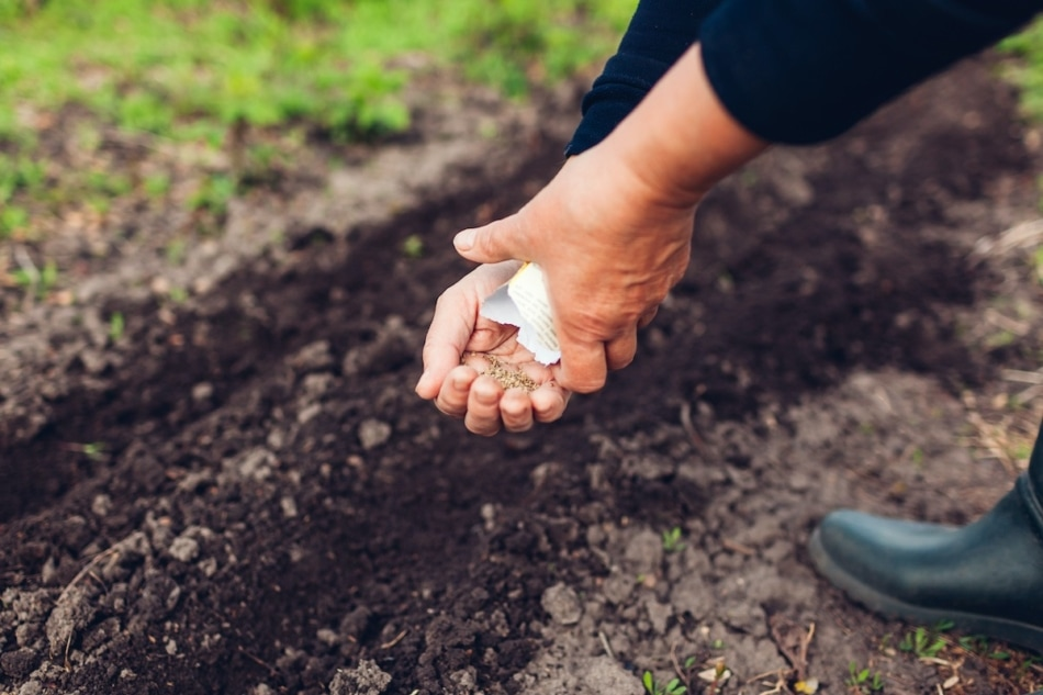 Sowing - Seed