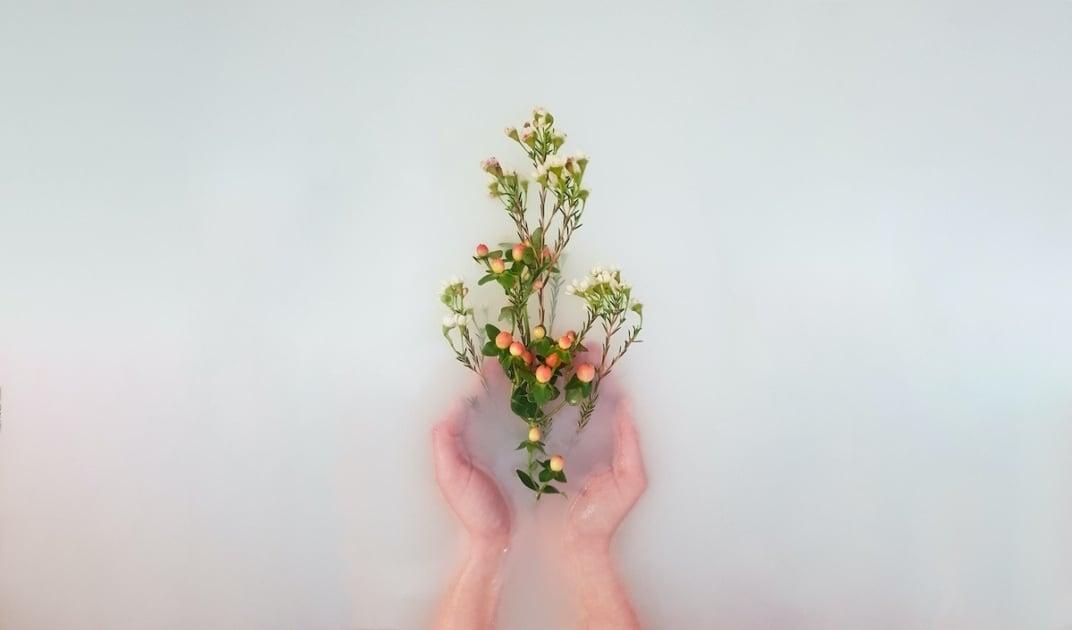 Floral design - Cut flowers