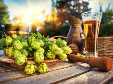 How To Grow Your Own Hops At Home featured image