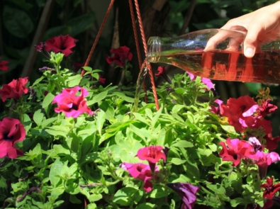 6 Homemade Fertilizer Teas Your Plants Will Love featured image