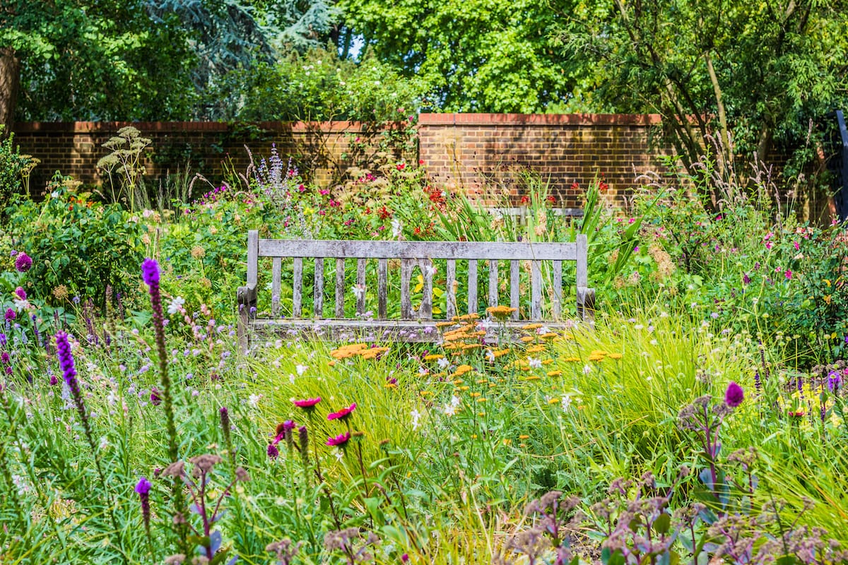 Backyard wildflower garden with bench