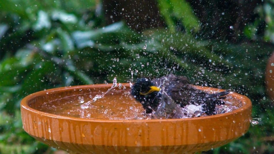 Little birds are take bath.Concept image contains little film grain.