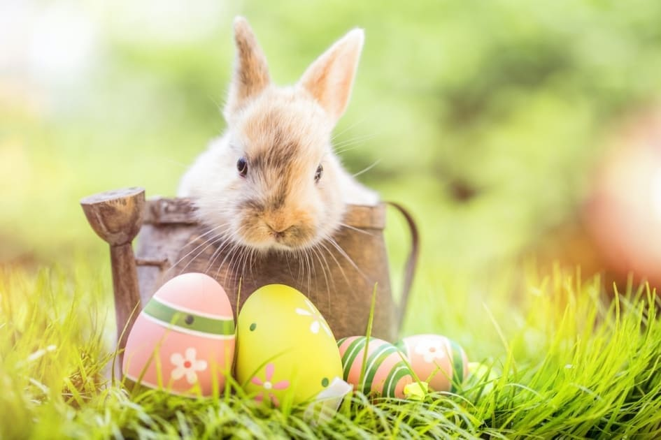 Easter Bunny - Wallpaper