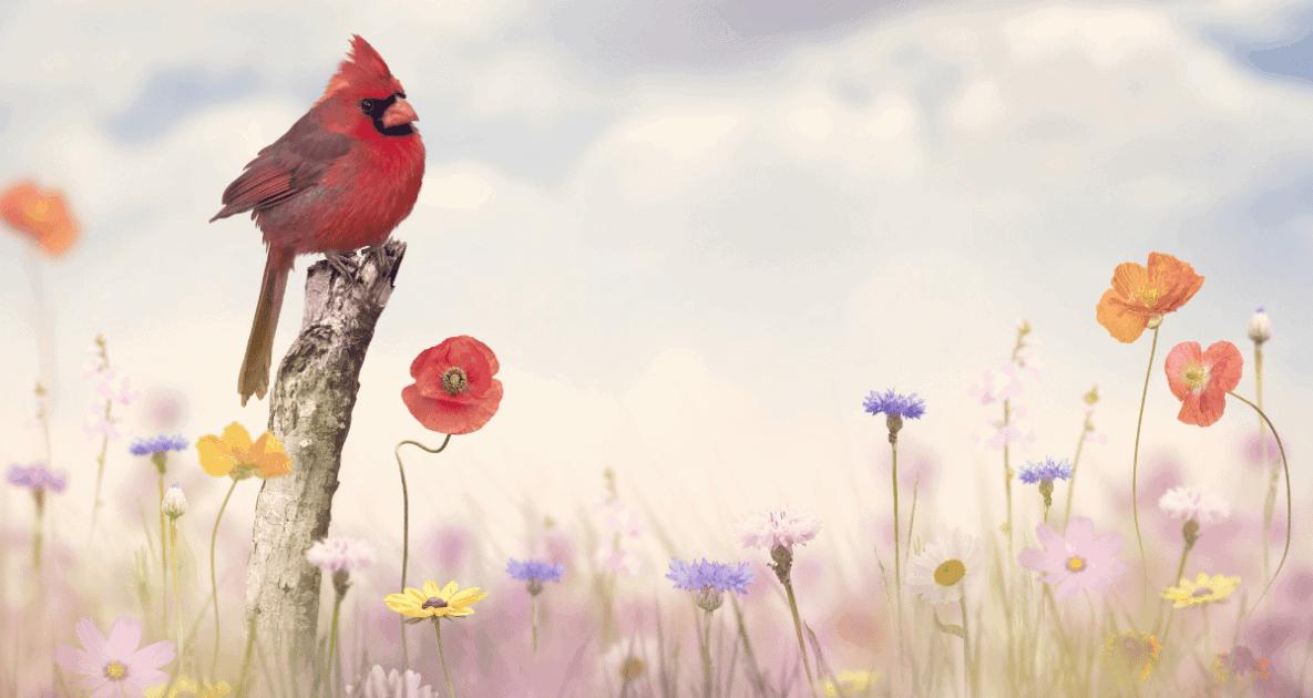 Northern cardinal - Image