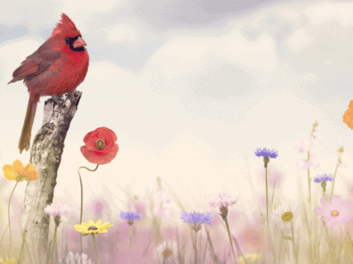 Seeing Cardinals? Could Be A Sign From A Loved One featured image