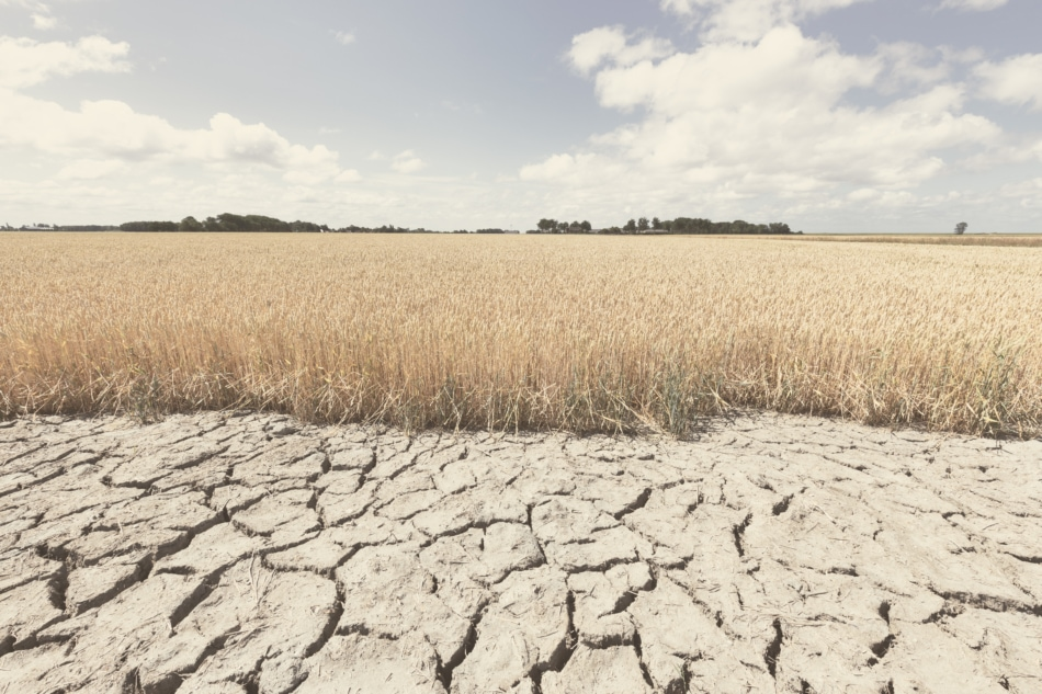 Dry and arid land with failed crops. Drought climate concept.
