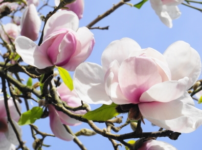 5 Best Flowering Trees That Add Color To Your Yard featured image