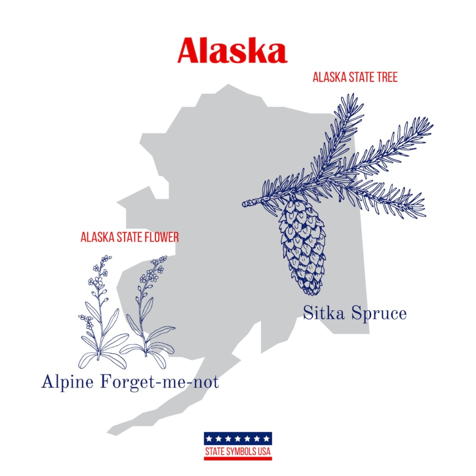 forget-me-not Alaska state flower and tree