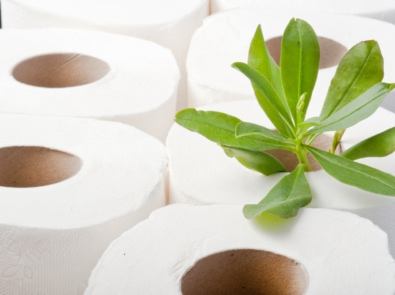 Bamboo Toilet Paper and Other Eco-Friendly Swaps To Try Today featured image