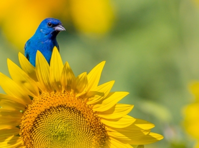 Unlikely Gardeners: Animals With Accidental Green Thumbs featured image