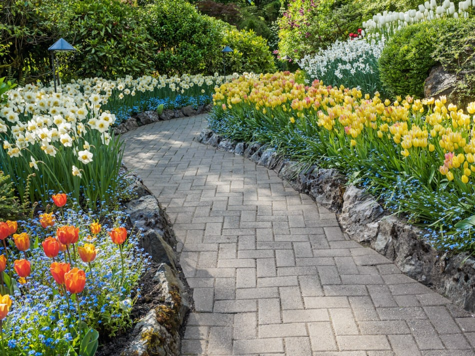 Beautiful garden path edged with bue flowers forget-me-not