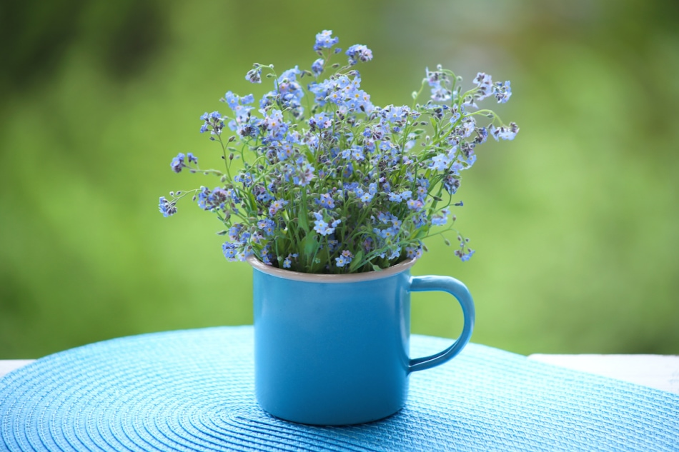 forget-me-nots in a cup