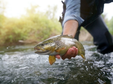 Fly Fishing: A Beginner's Guide featured image