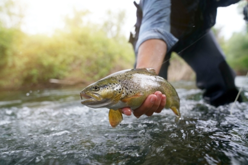 Fly Fishing: A Beginner's Guide