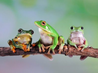 15 Fascinating Facts About Frogs You Probably Didn't Know featured image