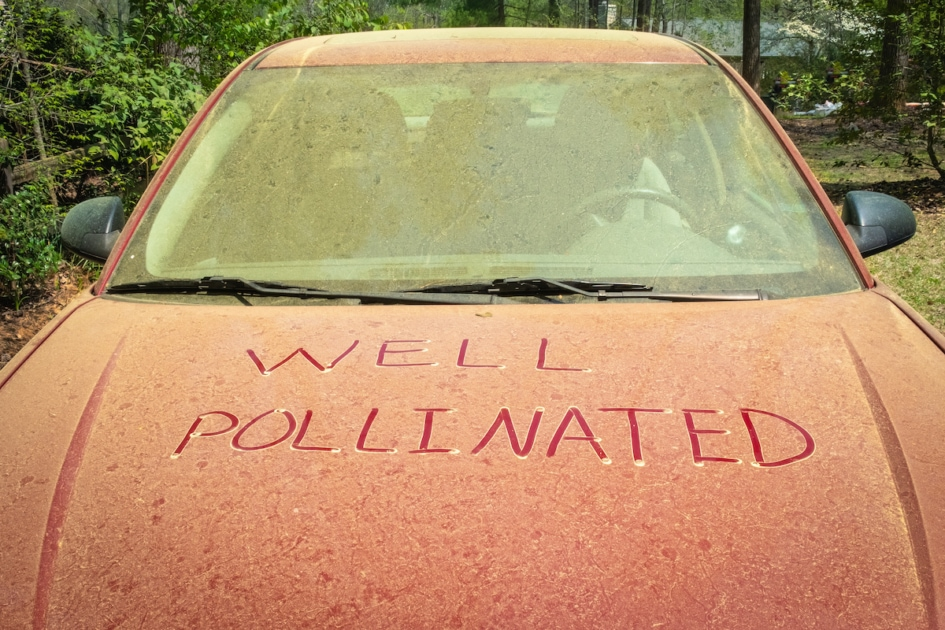 A thick layer of pine pollen on a car hood during spring with a funny note written in it that could mean maybe this is where new cars come from.