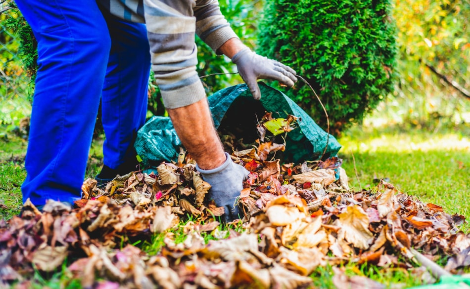 Man rakes withered and colorful leaves in the garden.