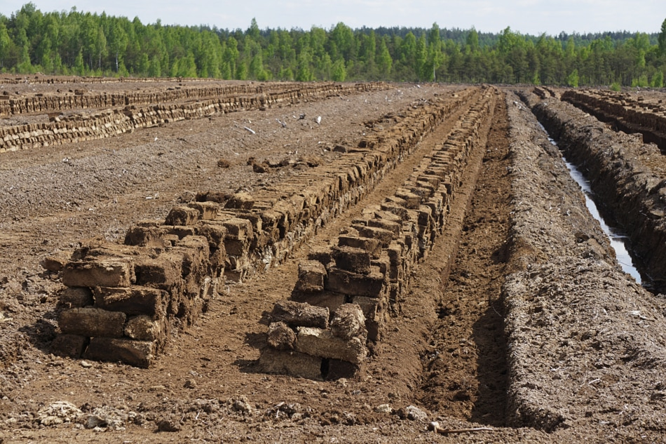 Pile of stacked bog peat moss turf briquettes drying in the field.