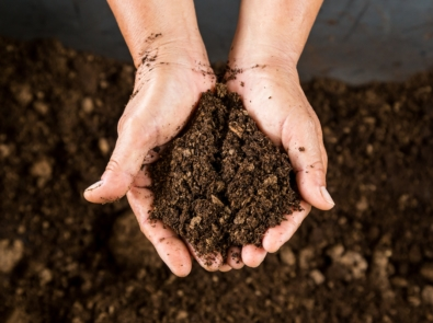7 Peat Moss Alternatives That Are Better For The Planet featured image