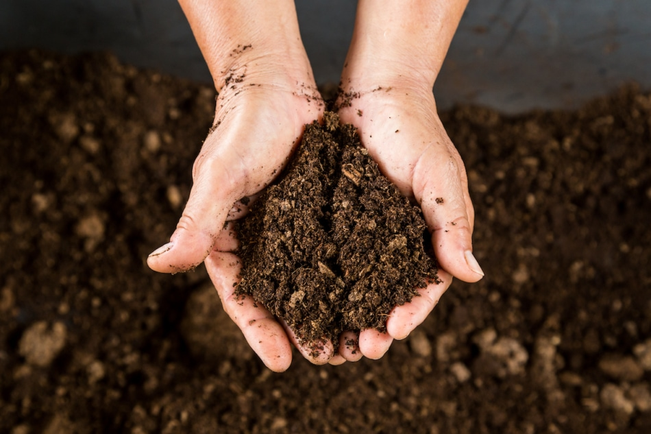 close up hand holding soil peat moss