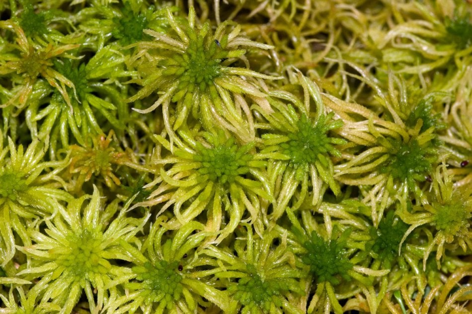 7 Peat Moss Alternatives That Are Better For The Planet