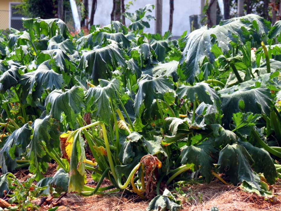 plant, dead plant, wilted plant, death, drought.