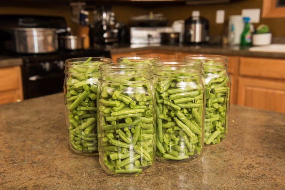Process of canning green beans.